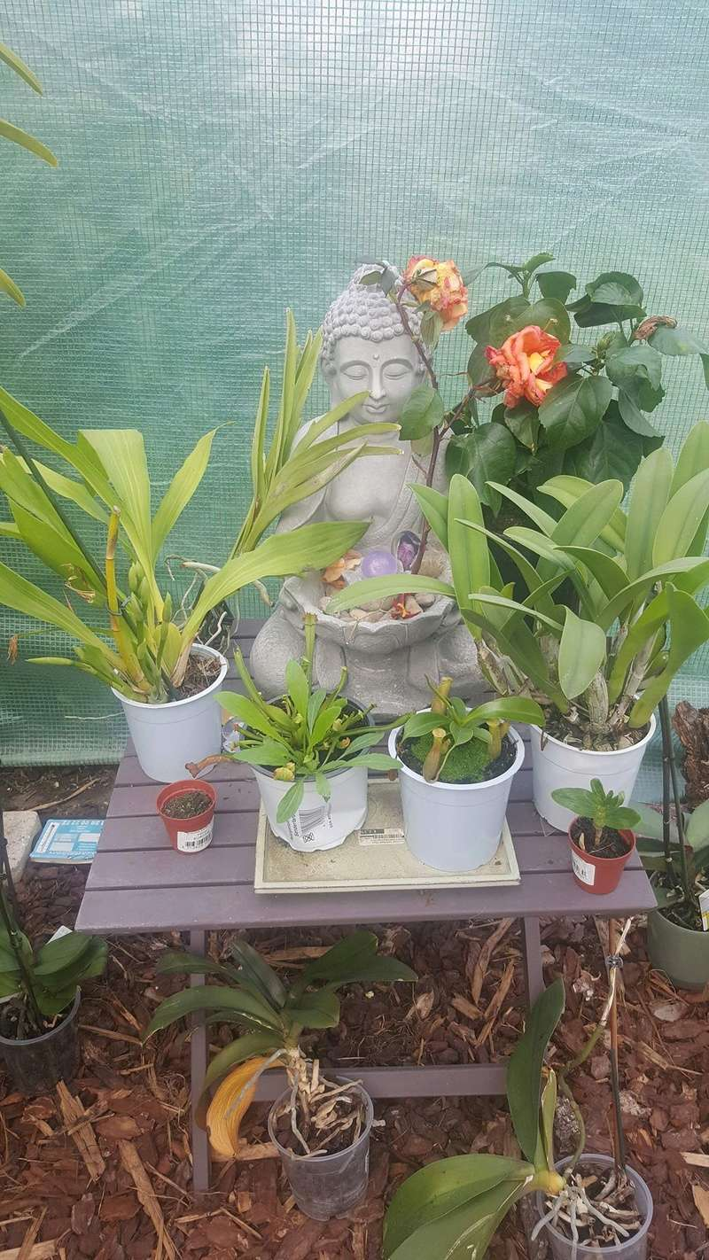 Mes orchidées Receiv31