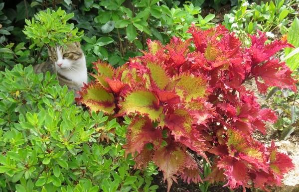 c'est chouette l'été au jardin ! Img_6015