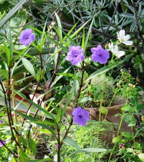 jardins d'été, jardins se plaisent Img_6215