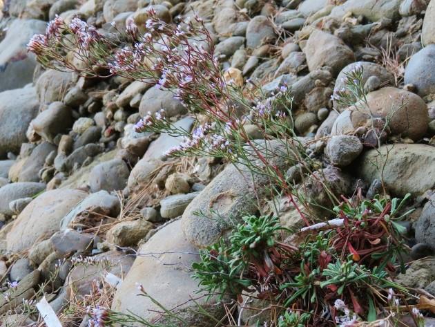 L'Ile verte à la Ciotat et ses pins tourmentés Img_6319