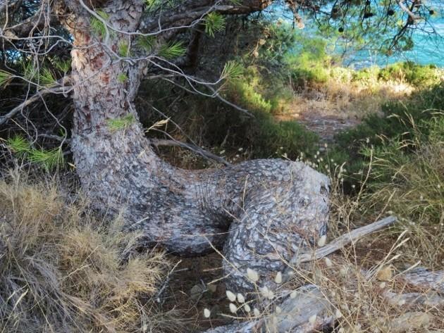 ile verte - L'Ile verte à la Ciotat et ses pins tourmentés Img_6324