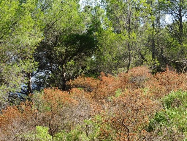 ile verte - L'Ile verte à la Ciotat et ses pins tourmentés Img_6325