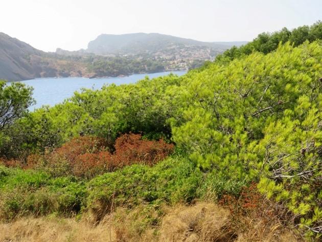 ile verte - L'Ile verte à la Ciotat et ses pins tourmentés Img_6326