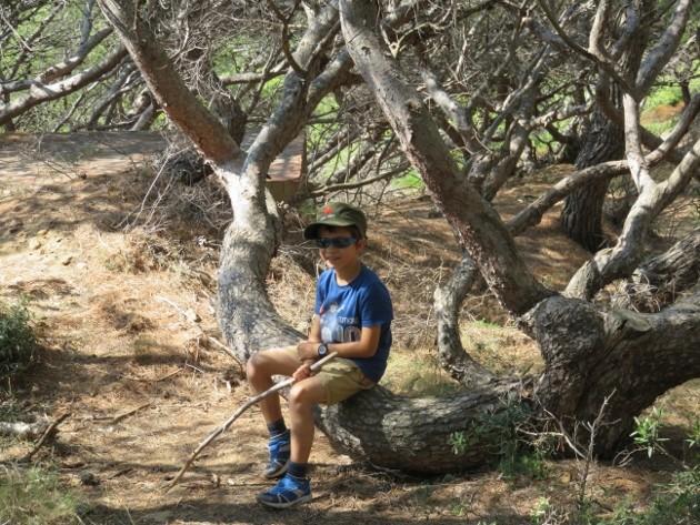 L'Ile verte à la Ciotat et ses pins tourmentés Img_6327