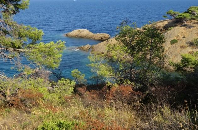ile verte - L'Ile verte à la Ciotat et ses pins tourmentés Img_6412
