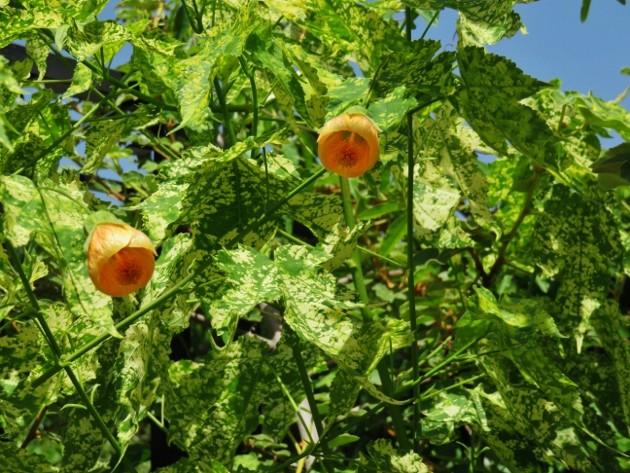 jardins d'été, jardins se plaisent Img_6414
