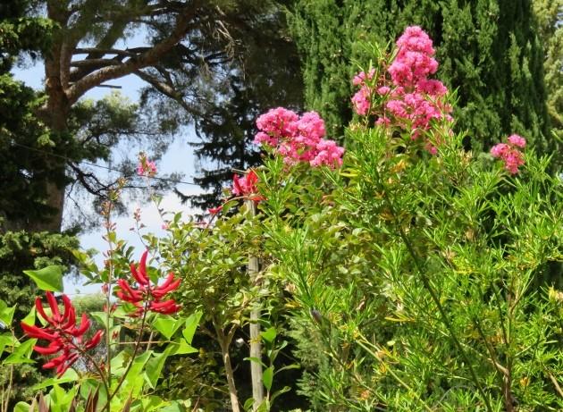 jardins d'été, jardins se plaisent Img_6415