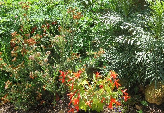 jardins d'été, jardins se plaisent Img_6416