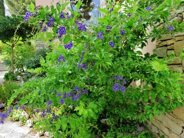 jardins d'été, jardins se plaisent - Page 2 Img_6710