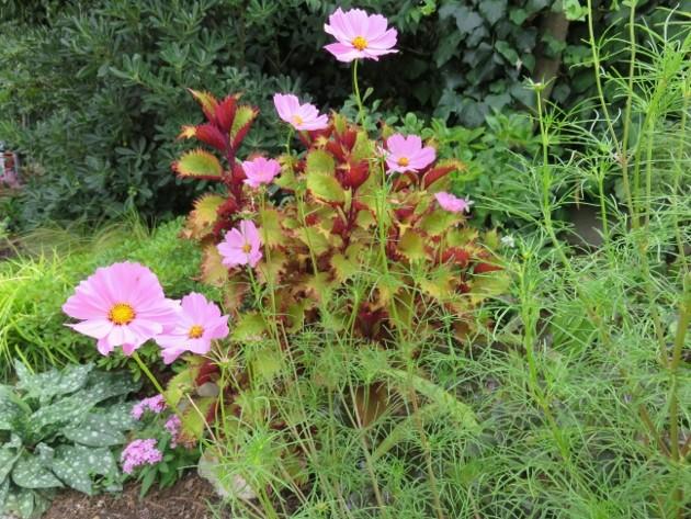 jardins d'été, jardins se plaisent - Page 2 Img_6711