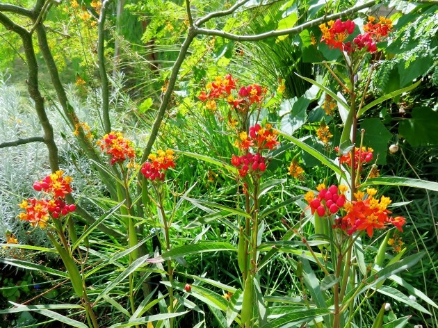 l'été indien des Fous Jardiniers Img_7314