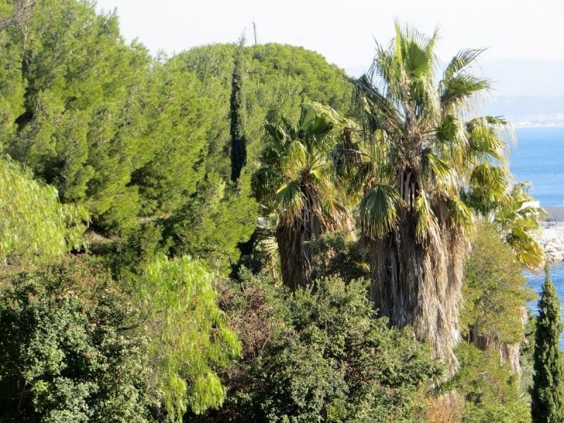 """La """"jupe"""" des palmiers ! Janvie16"""