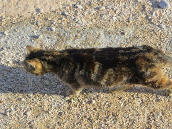 Les chats pêcheurs ! Janvie19