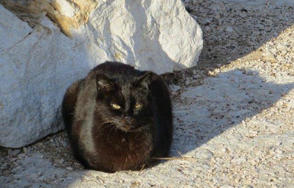 Les chats pêcheurs ! Janvie21
