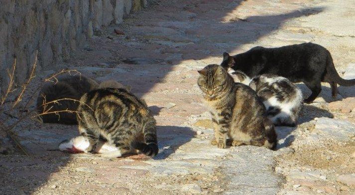 Les chats pêcheurs ! Janvie22