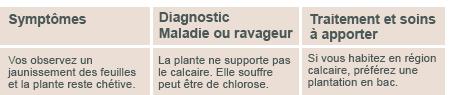 JARDINAGE ( janvier 2013 ) Diagno11