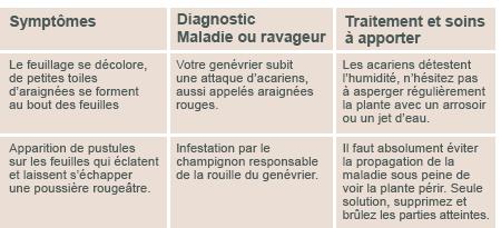 JARDINAGE ( février - mars 2013 ) Diagno16