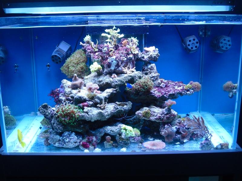 karlito's reef 2 Cimg6410