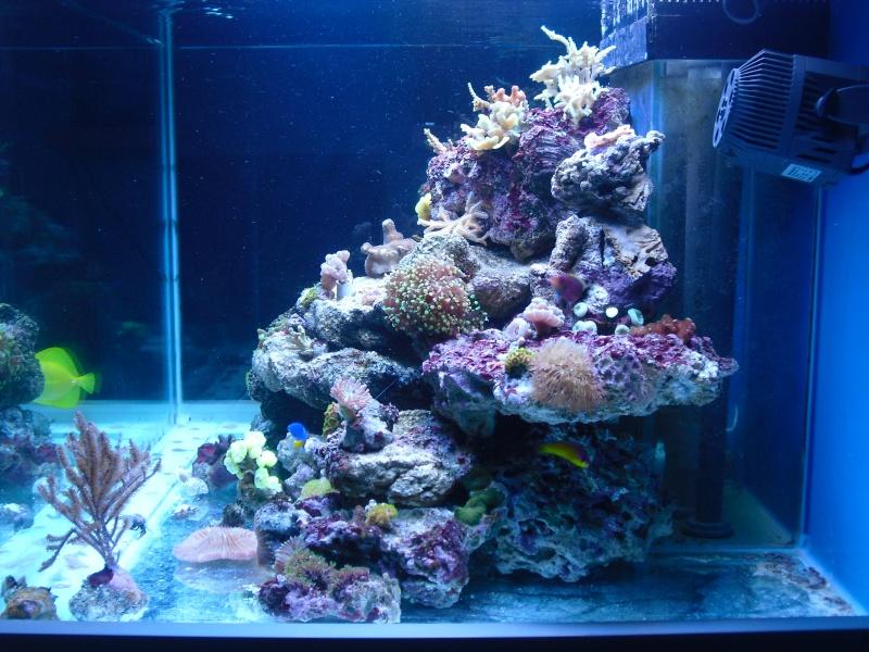 karlito's reef 2 Cimg6411