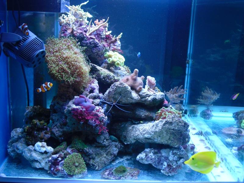 karlito's reef 2 Cimg6412