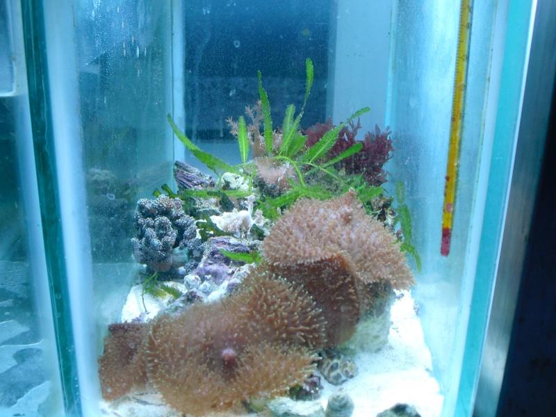 karlito's reef 2 Cimg6413