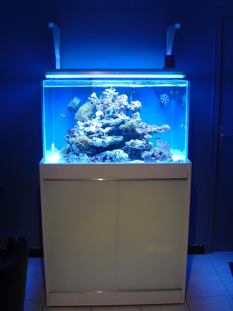 karlito's reef 2 Cimg6415