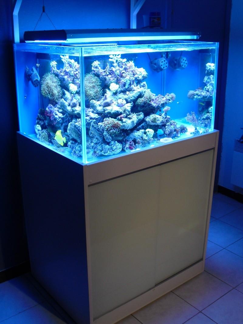 karlito's reef 2 Cimg6416