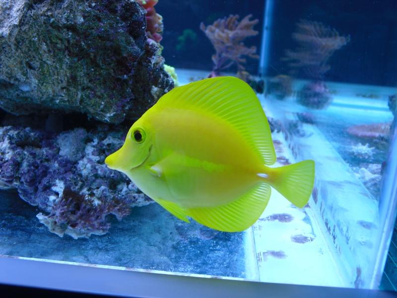 karlito's reef 2 Cimg6417