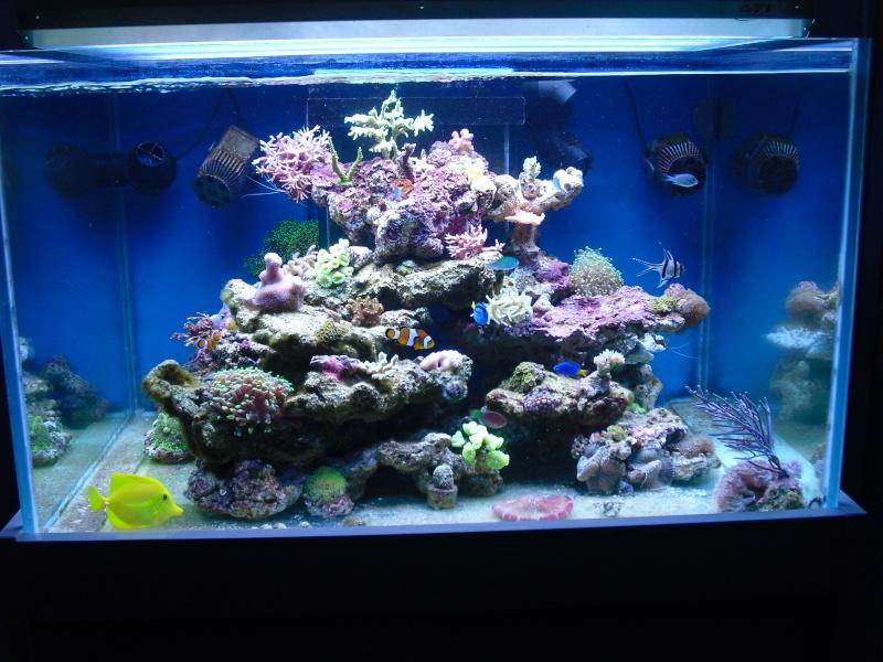 karlito's reef 2 Cimg6513
