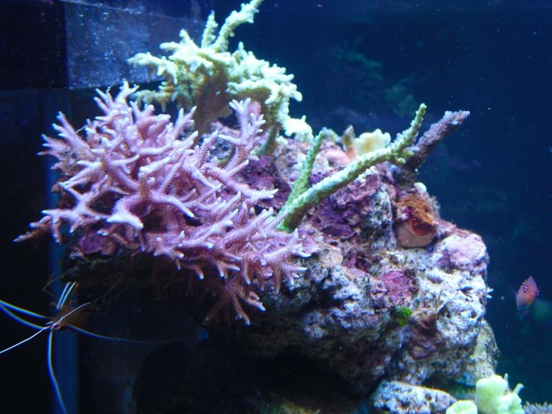 karlito's reef 2 Cimg6515