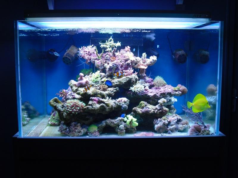 karlito's reef 2 Cimg6516