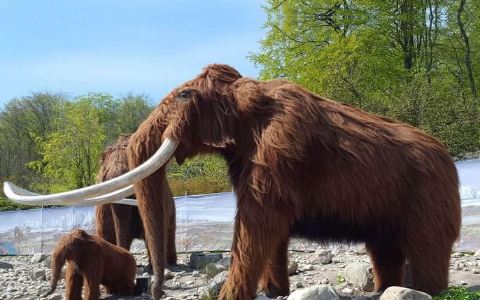 Des pulls pour les éléphants Ancytr10