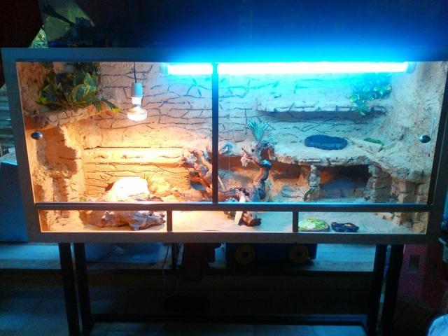 Regroupement des terrariums des membres Jessic10