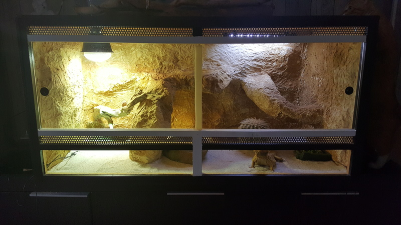Regroupement des terrariums des membres Laurac10