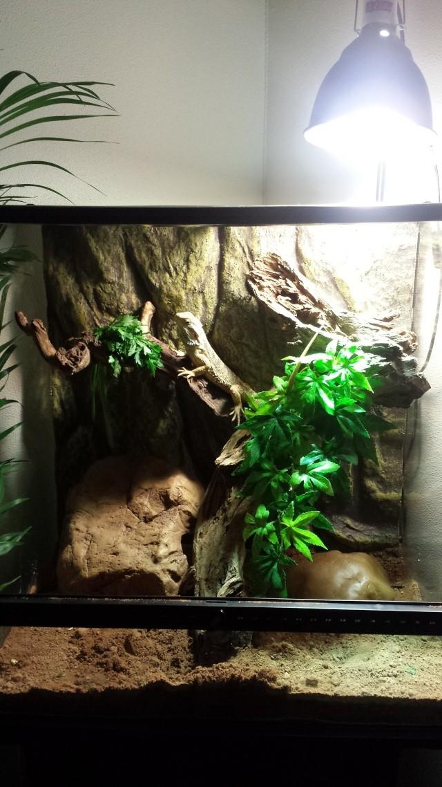 Regroupement des terrariums des membres Liloo10