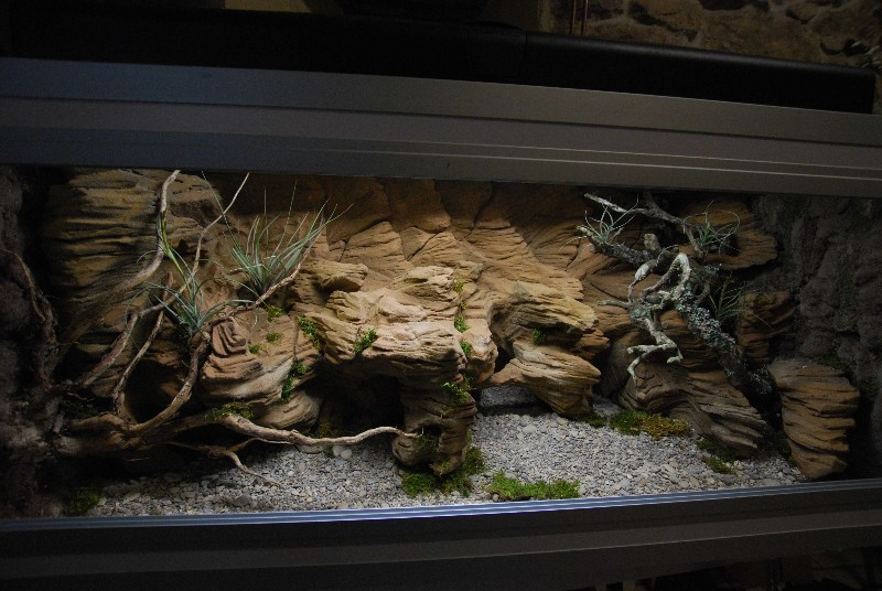 Regroupement des terrariums des membres Nykora10
