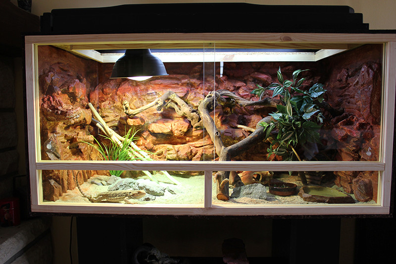 Regroupement des terrariums des membres Redsan10