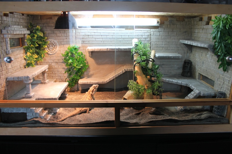 Regroupement des terrariums des membres Tequil10