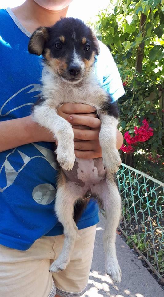 ARIZONA - chiot femelle croisée, née en mai 2017 - EN FA à PASCANI - décédée Arizon10