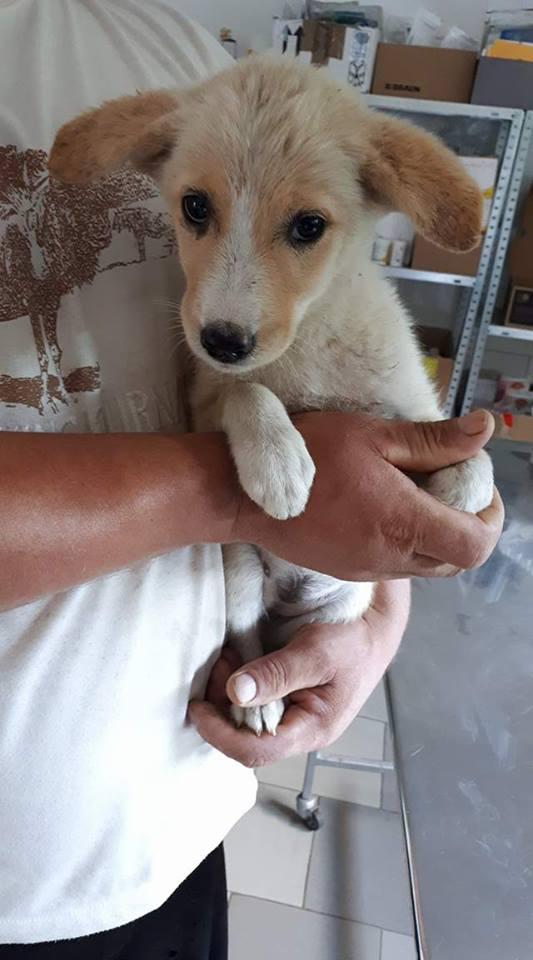 NAYA (ex-ARIELLE), chiot femelle croisée, né environ avril 2017 - REMEMBER ME LAND - Adoptée par Franco (57) Naya110