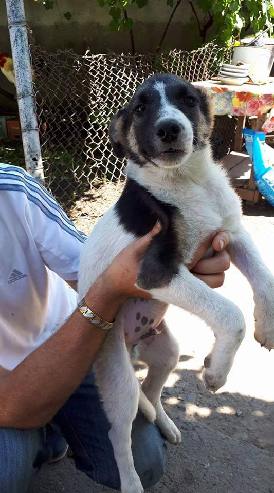 TEXAS, mâle croisé, de taille moyenne, né environ en avril 2017 - REMEMBER ME LAND - ADOPTE PAR CORINNE (Belgique) Texas10