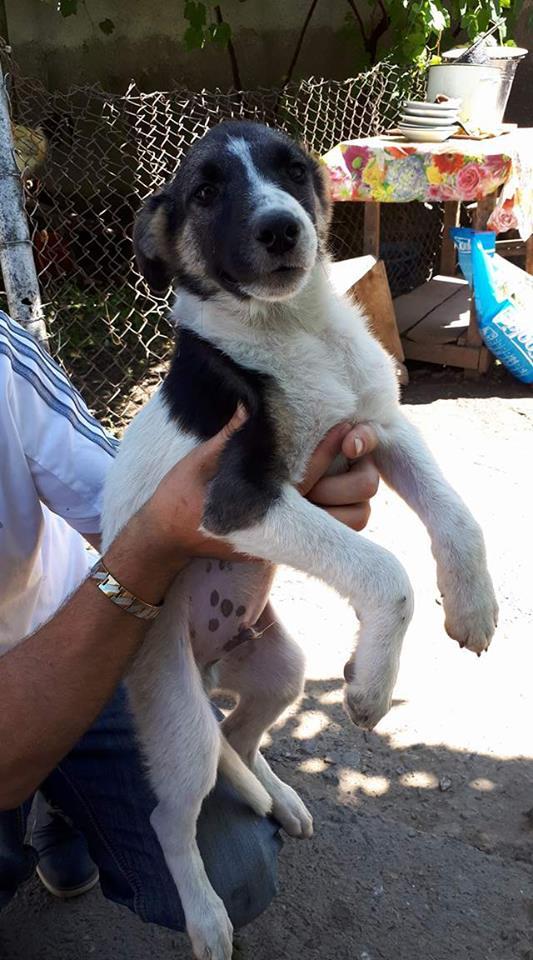TEXAS, mâle croisé, de taille moyenne, né environ en avril 2017 - REMEMBER ME LAND - ADOPTE PAR CORINNE (Belgique) Texas11