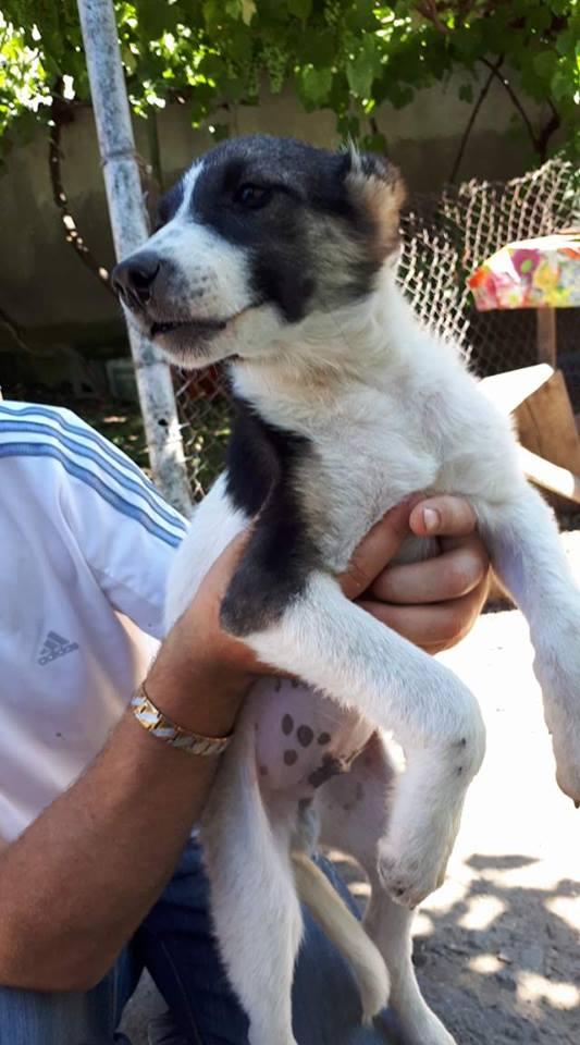 TEXAS, mâle croisé, de taille moyenne, né environ en avril 2017 - REMEMBER ME LAND - ADOPTE PAR CORINNE (Belgique) Texas110
