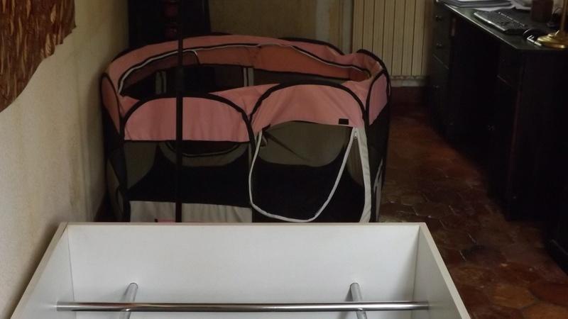 La nursery des chiots de Hope Dscf1027