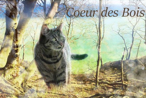 [Libre] Cœur des Bois ♂ Guerrier 45 Lunes [Total] Coeur_11