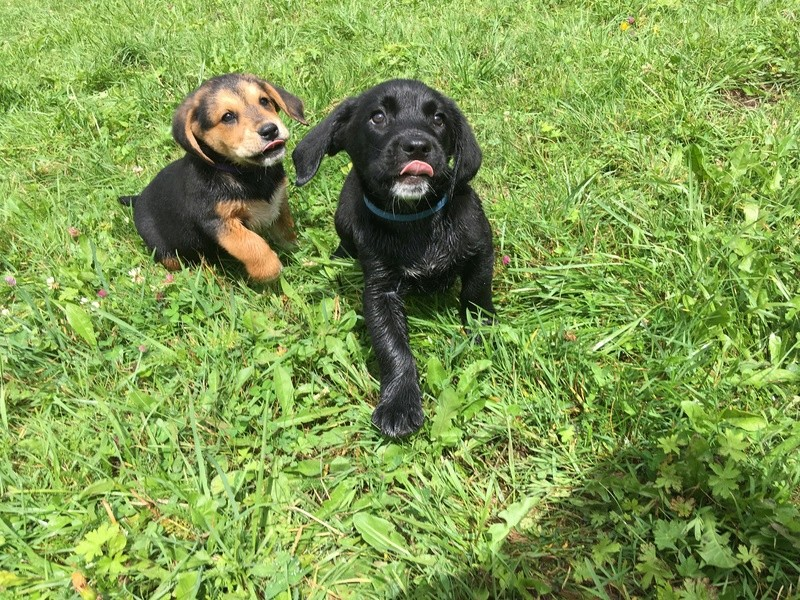 Chiots X chasse ADOPTÉS Img_0412