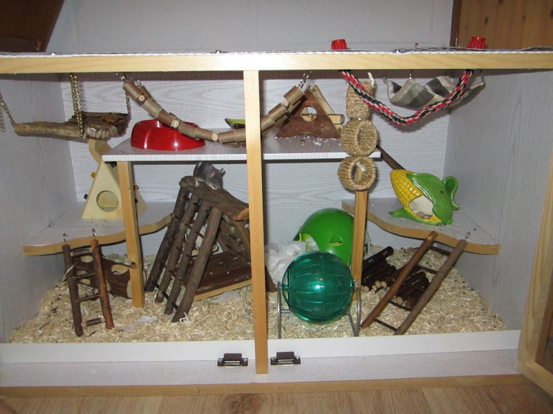 Est-ce que cette cage pourrait convenir pour deux rats ? Img_0010