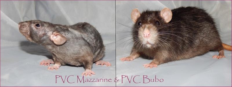 PVC Mazzarine X PVC Bubo Mazzar10
