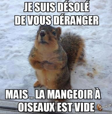 [Ouvert] Animaux divers. - Page 20 67274610