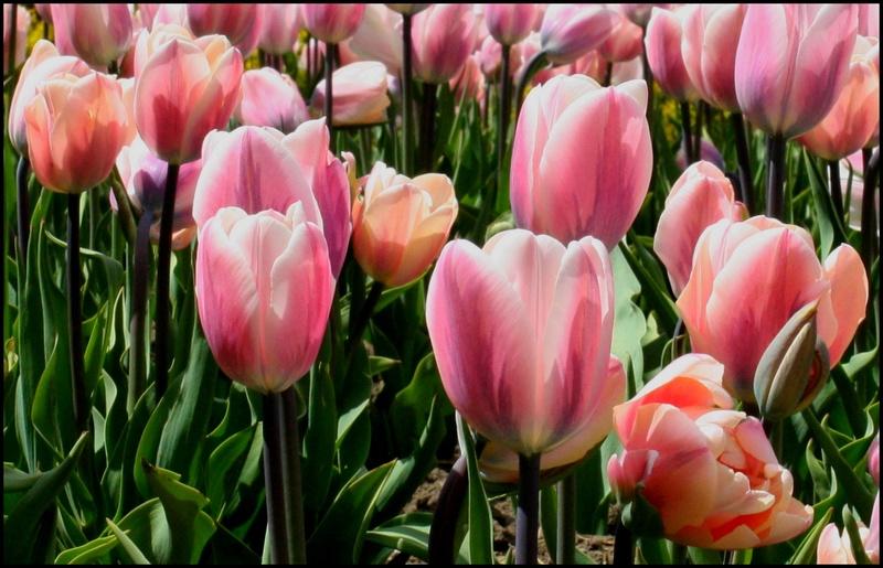 Thème pour le mois de juin 2017 :  Jardin fleuri  905_ja12